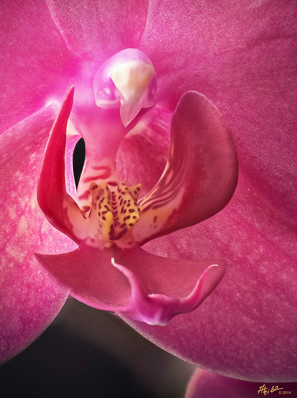 Orchid up close