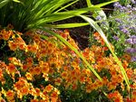 Title: Flowers at the San Diego Zoocanon A650is