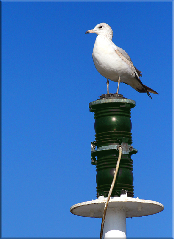Look-Out Post