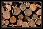 Title: Logs from