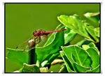 Title: The red dragonflyNikon D70s