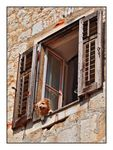 Title: The small watchdog in the window