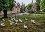 Title: Welcome Brugge!