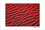 Title: Red&Black for Robertone