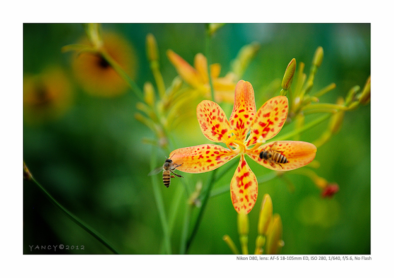 Bees & Orchids