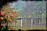 Title: Wooden bridge in the mistNikon D3100