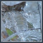 Title: icy