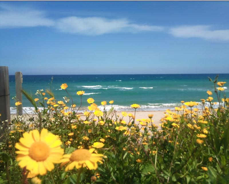 the flowers and the sea