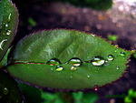 Title: drops& leaves#2