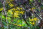 Title: GREEN