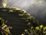 Title: Bali - rice terraces