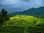 Title: West Sumatera Rice field part 2Olympus E-300