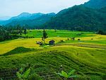 Title: West Sumatera Rice fieldOlympus E-300