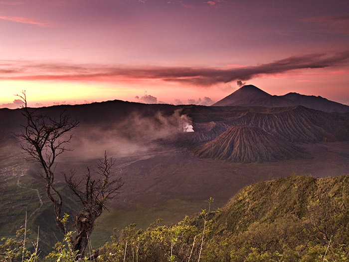 The exotic bromo
