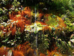 Title: Water on moss