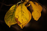 Title: welcome to autumn III