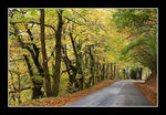 Title: Road in autumn