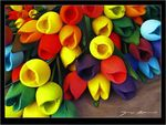 Title: Tulips of wood
