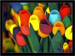 Title: Tulips full color