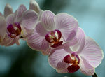 Title: Orchids For Your Sunday