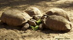 Title: Turtles Lunch Meeting