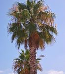 Title: Palm Tree