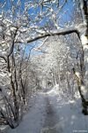 Title: Winter PathSony A350
