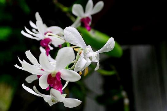 local orchids