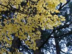 Title: Autumn yellow