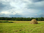 Title: Solitary hay rack