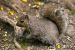 Title: squirrelCanon EOS 5D Mark II