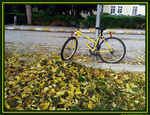 Title: Autumn in the Campus