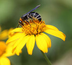 Title: Wasp on flower.Canon Digital EOS 40D