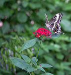 Title: Butterfly.Canon EOS 600D