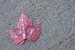 Title: Lonely Leaf