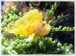 Title: yellow fish..NIKON COOLPIX 7900