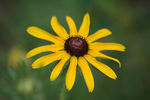 Title: Lonely Daisy
