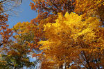 Title: Fall Color