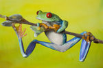 Title: The adventurous frog