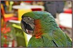 Title: Parrot too