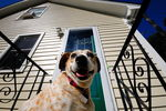 Title: A Smiling Doggy