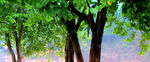 Title: Trees of Guangxi