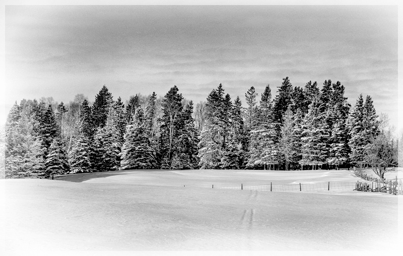 Black and White Winter