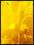Title: yellow flowerSamsung Galaxy S4