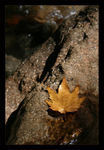 Title: The Leaf