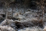 Title: Snow and frost