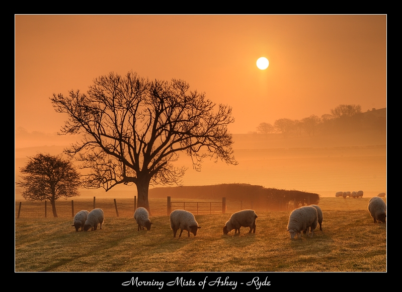 Morning Mists of Ashey