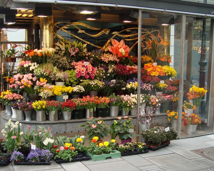 FLOWERS IN SHOP