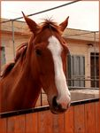 Title: Browny The HorseCANON 7D