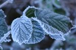 Title: Frosted LeafCanon EOS 1000D